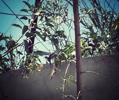 Little hummingbird (Scorpio-) Tags: somewhere uploaded:by=flickrmobile flickriosapp:filter=mammoth mammothfilter
