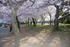 Cherry Blossoms Wed 10 Apr 2013  (173)  Washington DC (smata2) Tags: this you good national cover photograph be pick geographic titlephotosharingimg a i are height48 hrefhttpwwwflickrcomgroups83374492n00 srchttpstaticflickrcom1042978201971b62ce7b44ojpg width129 altnominateda hrefhttpwwwflickrcomgroups83374492n00national enougha