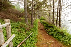 Fence, Path, Ocean, Fog (Karen_Chappell) Tags: fence path ocean fog trees trail eastcoast eastcoasttrail avalonpeninsula torscove mobile green brown newfoundland nfld canada atlanticcanada canonefs1022mm wideangle scenery landscape scenic