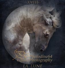 la Lune (PHOTODINE64 Equus Photography) Tags: cheval horse equus photodine64 horsephotography equinephotography equusphotography equestrianphotography horsephoto horsepicture horsephotographer equestrian equestrianart equestrianartist equineart photographeequestre photographieequestre
