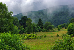 Hay meadows (Hejma (+/- 4500 faves and 1,5milion views)) Tags: bieszczady national park polish landscape darkclouds tree forest meadows wildflowers grazing hills