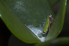 Inseto (Andres E. Meyer) Tags: 2016 agosto insetos macro inseto insect