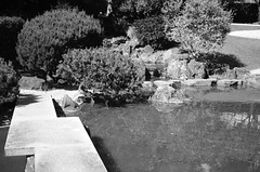Japanese garden at the Japan Cultural Institute in Rome (SS) Tags: ss pentax k5 italy lazio roma smcpentaxm50mmf17 plant outdoor warter japanesegarden garden istitutogiapponesediculturainroma japanculturalinstituteinrome blackandwhite monochrome daylight