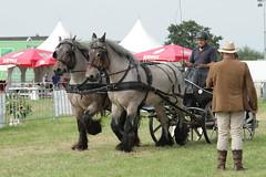 IMG_7648 (Snapshot(wo)man) Tags: rockanje powerhorse trekpaarden