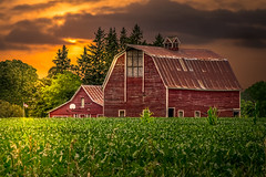 Boys Are Gone (henryhintermeister) Tags: barns minnesota oldbarns clouds farming countryliving country sunsets storms sunrises pastures nostalgia skies outdoors seasons pierz