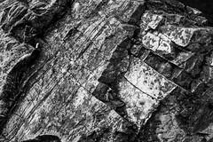 DSC_7702-Edit-Edit (Custom) (wreckdiver1321) Tags: alberta canada exploration explore exploring glacier granite honeymoon hotel lake lakes landscape mountain mountains national northern overland overlanding park prince rock rocks rocky scenery tree trees vacation wales waterton wedding wild wilderness
