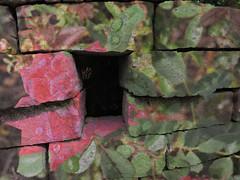 flowers on rocks (Bri Lipford) Tags: flower rocks overlay sculpture spray paint graffitti color