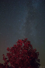 Via Lctea (Sergio Sa) Tags: milky way via astrofotografia astrophotography alqueva dark sky estrelas natureza nature stars lctea nightphotography canon 600d t3i 1855mm mouro