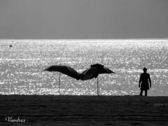 CASTI201608__174R-BYN_FLK (Valentin Andres) Tags: bw blackwhite blancoynegro byn castelln espaa pescola playa spain beach maana morning