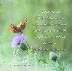 Colossians 3:12 (dianabog ) Tags: bible scripture theword