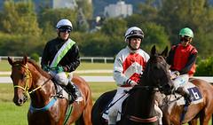 Praha 24.9.2016 | LOKO TRANS European Jockeys Cup 2016 (Zahadam Industries CZ) Tags: prague czech republic praha esk republika dostihy zvodit velk chuchle jezdci