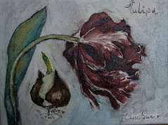 Painting a tulip (1th fase) (Elise Swart) Tags: flowers france flower painting tulips paintings schilderij tulip frankrijk underconstruction fr bloemen schilderijen lafrance tulipe tulpen bloem tulp tulipes bloei botanisch olieverf ldf bloeien fleurfleurs werkinuitvoering vloembol