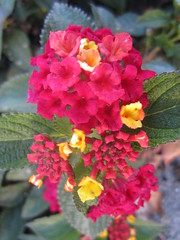 Nature Elements (shaire productions) Tags: plants plant flower nature floral natural image picture pic imagery