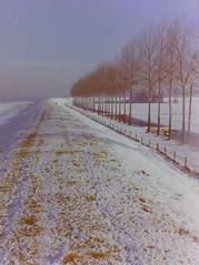 dutch winter (54) (bertknot) Tags: winter dutchwinter dewinter winterinholland denbommel winterinthenetherlands hollandsewinter denbommelandsurrounds winterinnederlanddutchwinter