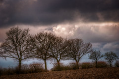 Winters Trees (Mark Seton) Tags: trees winter nature bare essex hdr ploughed uttlesford wimbish countyofessex carverbarracks rowneywoods