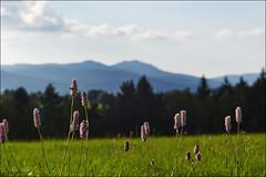 Sommer im Bayerischen Wald (Helmut Reichelt) Tags: leica germany bayern deutschland bavaria sommer wiese arber m9 bayerischerwald leicateleelmaritm90mmf28ii colorefexpro4 captureone7