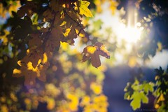 Here Comes the Light [explored] (icemanphotos) Tags: light colors beautiful yellow season leaf spring interesting mood view bokeh top details naturallight best explore winner explored