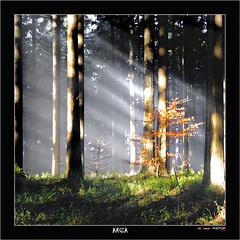 Argia (Jabi Artaraz) Tags: light luz sony bosque invierno zb haya argia basoa abetos negua euskoflickr superaplus aplusphoto jartaraz alfa350 flickrbronzetrophygroup