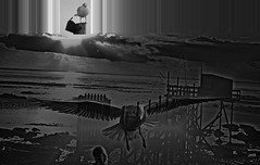 Sous le ciel (Jean-marc17340) Tags: bird art collage composition noiretblanc montage imagination oiseaux ocan cration littoral charentemaritime chatelaillonplage blinkagain