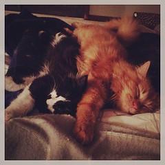upload (merrickball) Tags: cat square kitten squareformat rise finnegan stinks iphoneography instagramapp uploaded:by=instagram