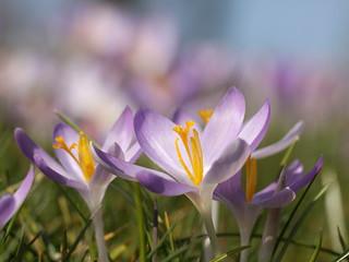 spring , explored! ( #332 )