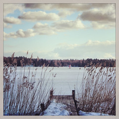 On thin ice (MikeHarnetty) Tags: winter sea white snow ice reeds pier frozen vinter sweden stockholm jetty sail sn archipelago skrgrd vass sterskr iceyachting