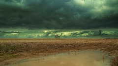 Mud fields (Eric Goncalves) Tags: light sky storm cold color tree nature water field clouds landscape day mud treescape array nikond7000 ericgoncalves