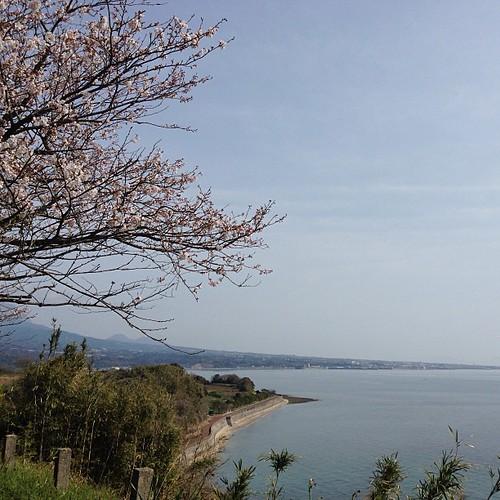 벚꽃과 해안가.