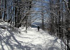 lomb alagút / out of the tunnel (debreczeniemoke) Tags: snow forest hiking tunnel hó erdő túra alagút canonpowershotsx20is gutinhegység munţiigutâi munţiigutin