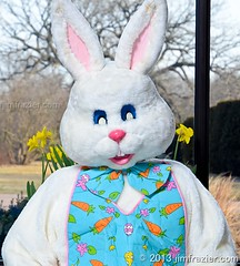 The Easter Bunny wanted a nice shot for his Facebook page (Jim Frazier) Tags: park flowers party portrait plants usa white holiday rabbit bunny gardens museum breakfast pose garden easter fur botanical march costume illinois spring furry funny eyecontact v100 pov flash humor posed posing parties dupage symmetry il celebrations portraiture harvey brunch symmetrical botanic botanicgarden preserve botanicalgarden perpendicular caption centered daffodils myth q3 easterbunny wheaton publicgarden cls blooming cantigny mythical strobes headon dupagecounty cantignypark eyetoeye centralperspective 2013 theeasterbunny strobist stobist sillywabbit ldmarch jimfraziercom adifferentpersona wmembed ld2013