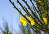 wild wild flower (SusanCK) Tags: blue sky flower susancksphoto empressionism