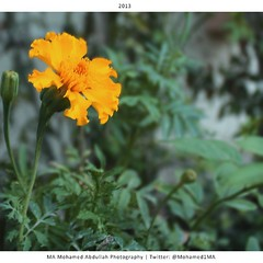 #Flower # # # # ( MA Mohamed Abdullah) Tags: canon square photography photo bahrain nikon photographer image tag photographers photographic add squareformat saudi arabia normal kuwait oman doha            qatari            qataris           iphoneography  instagram instagramapp uploaded:by=instagram mohamed1ma mohamedma