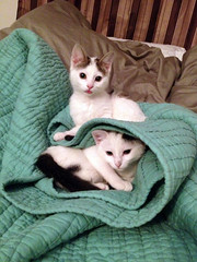 Update: Dottie & Shirley (Jimmy Legs) Tags: street cats shirley mochi adopted dottie bushwick matza happytails