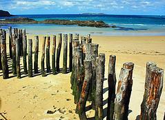 St. Malo, France (LauraMountfordPhotography) Tags: sea holiday france tree beach nature coast sand shore trunks stmalo