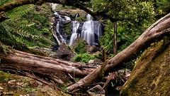 Stevenson Falls (Mark-Cooper-Photography) Tags: tree forest canon river waterfall efs1855mm australia victoria fallen vic greatoceanroad limb 550d stevensonfalls barramunga eos550d markcooperphotography