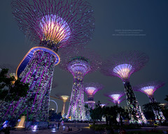 Gardens by the Bay Left (Sukarnjanaprai) Tags: show blue light sunset architecture night marina garden landscape bay singapore asia getty gettyimages