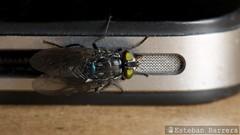 (Esteban Barrera) Tags: fly ecuador mosca nikkor105