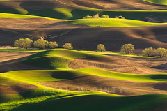 Palouse Layer Cake (Ryan McGinty) Tags: statepark usa landscape washington spring wheat rollinghills undulating palouse whitmancounty steptoebutte ryanmcginty