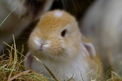 here i am :) (Sandra Schmid ) Tags: portrait baby bunny bunnies up close tamron90mm pentaxk30 germanlopear