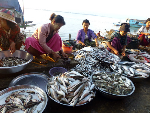 Local fish market in Ayeyarwadi  delta, Myanmar. Photo by Jharendu Pant, 2012.