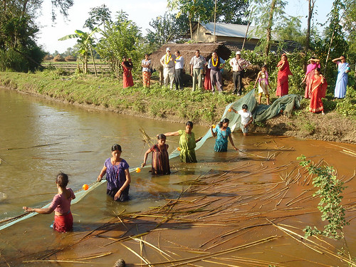 Tharu ethnic women harvesting fish from their farm pond in Chitwan, Nepal. Photo by Jharendu Pant, 2006.