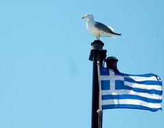 greek seagull (hatschiputh) Tags: greece sesgull athos boat flag