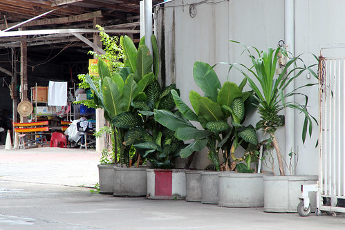 Streetside plantings in Thailand