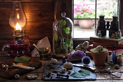 The Edwardian Naturalist's Workbench (memoryweaver) Tags: memoryweaver slate poppyheads eryngium specimen ginkgobiloba antiques vintage books observersguides magnifyingglass flame light lamp kerosene paraffin oillamp backlit window tabletop naturetable nature naturalist
