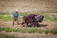ycie w cieniu Himalajw (www.wlasnadroga.pl) Tags: nepal wlasnadroga kathmandu people work himalayas