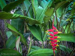 IMG_8881-6 (Reynaldo Mondragon) Tags: flowers gomez farias selvatic vegetation reymondragon