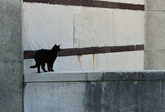 Stroll on the wall (kiichan20) Tags: milan milano cimitero monumentale cementery cat gatto blackcat gattonero