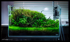 Green Aqua Showroom (viktorlantos) Tags: aquascaping aquascape adahungary aquariumplants aquarium aquascapingshopbudapest aquadesignamano plantedaquarium plantedtank plantedaquariumgallery greenaquagallery greenaquahungary növényesakvárium berendezés underwaterworld