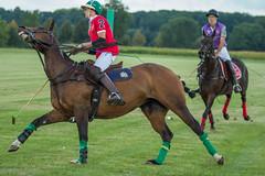 IMG_0720 (ElsSchepers) Tags: belgianpolotrophy lions hasselt polo paarden horses