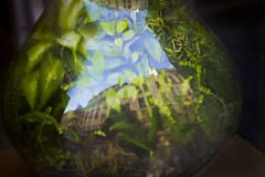 Petit Monde (Calinore) Tags: paris city ville france vieme saintgermaindesprs reflet reflection jungle leak leaves feuilles explore